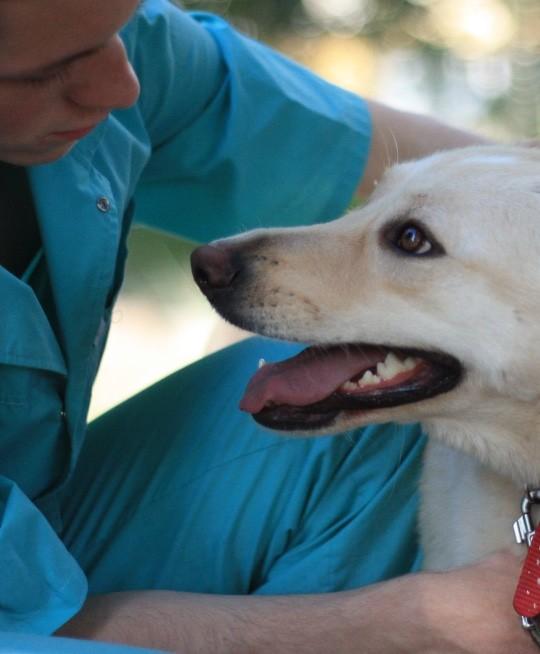 Виклик ветеринара додому
